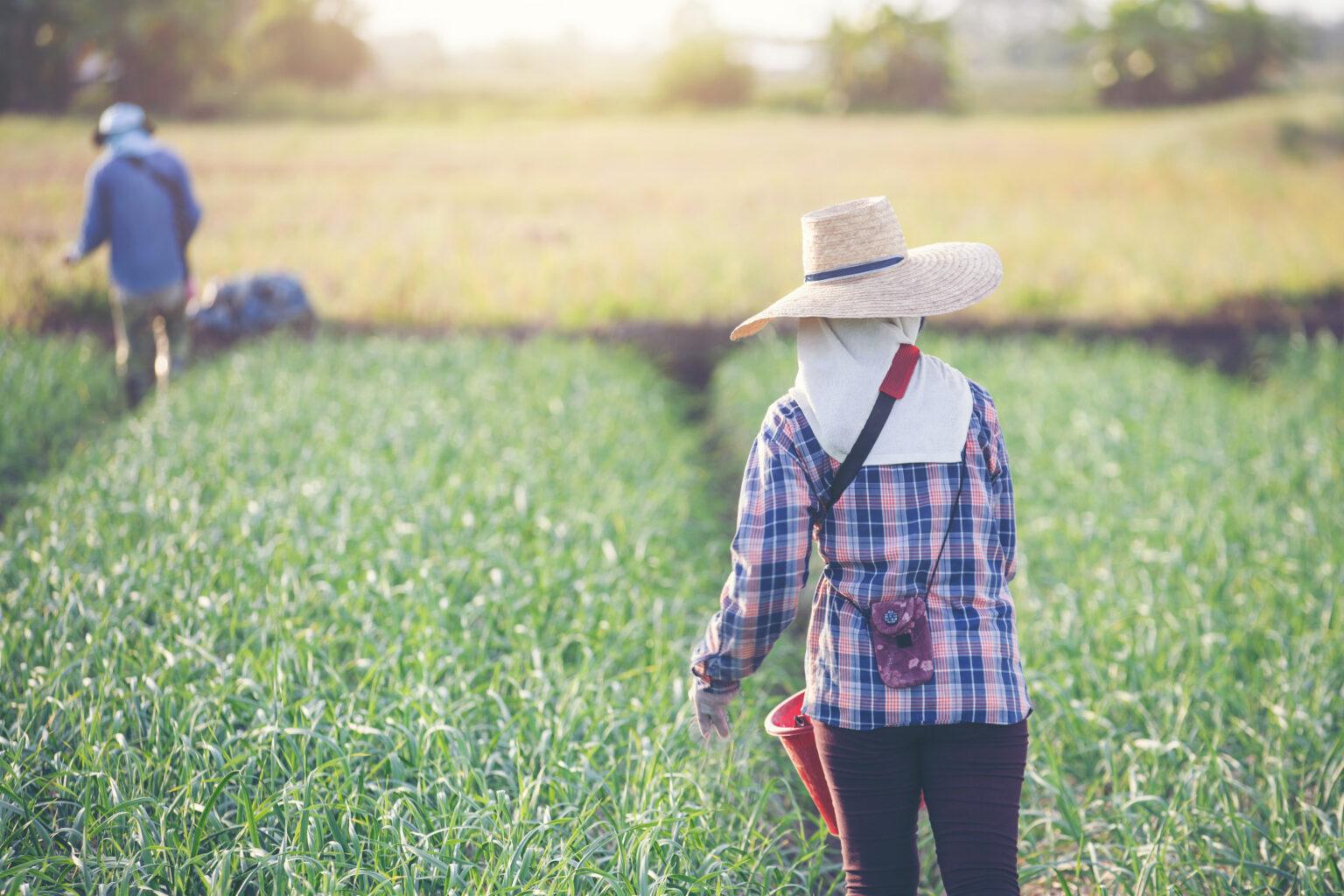 Vemos duas pessoas em uma plantação (imagem ilustrativa).