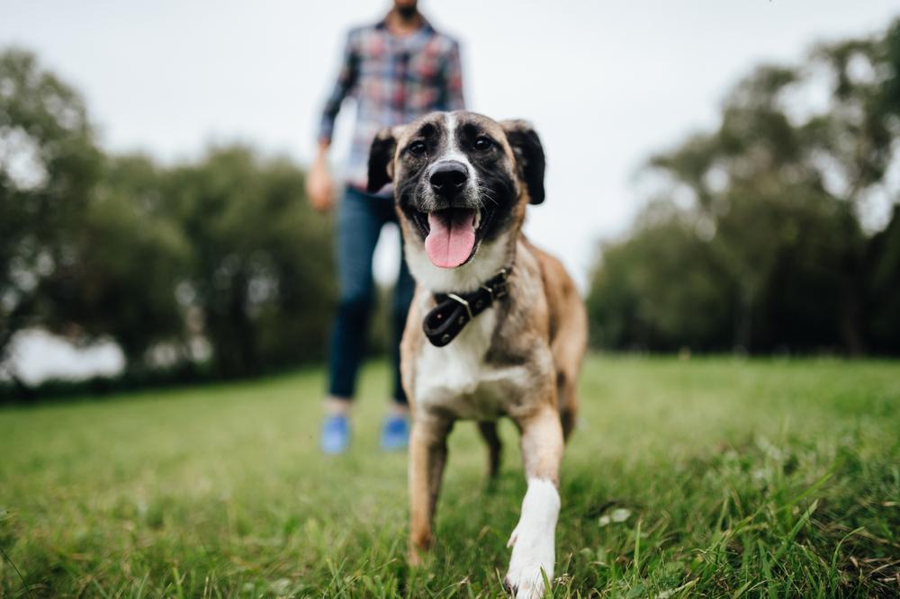 Vemos um cachorro em primeiro plano em um parque aberto; seu dono ao fundo (imagem ilustrativa). Texto: franquias baratas 2021.